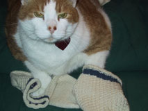 Betsy's Sock Therapy socks with her 7-toed cat Darwin